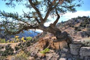 Tree5 small