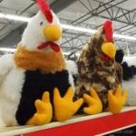 Chicks3_2