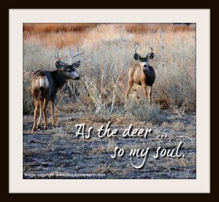 """ALT=""""Deer watch and listen"""""""