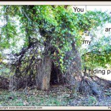 "ALT=""Hollow tree"""