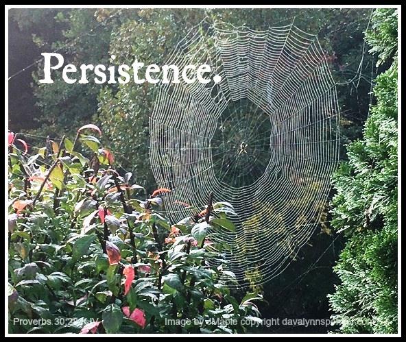 """ALT=""""orb-weaver spider web"""""""