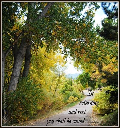 "ALT=""path through the woods"""